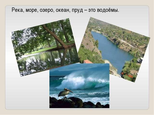 Река, море, озеро, океан, пруд – это водоёмы.