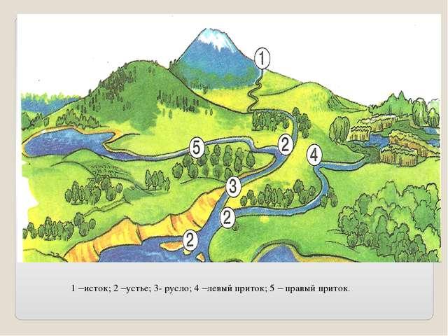 1 –исток; 2 –устье; 3- русло; 4 –левый приток; 5 – правый приток.