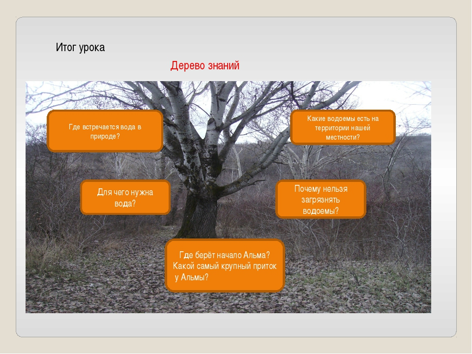 Итог урока Дерево знаний Какие водоемы есть на территории нашей местности? Гд...