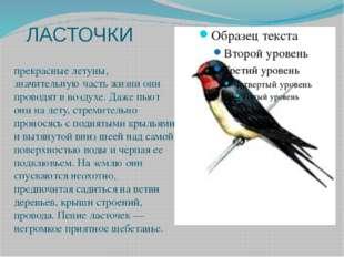 ЛАСТОЧКИ прекрасные летуны, значительную часть жизни они проводят в воздухе.