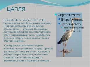 ЦАПЛЯ Длина 28-140 см, масса от 100 г до 4 кг. Размах крыльев до 180 см, лета