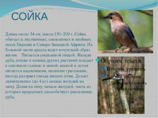 СОЙКА Длина около 34 см, масса 150–200 г. Сойка обитает в лиственных, смешанн