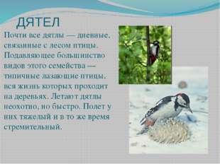 ДЯТЕЛ Почти все дятлы — дневные, связанные с лесом птицы. Подавляющее большин