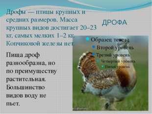 ДРОФА Дрофы — птицы крупных и средних размеров. Масса крупных видов достигает