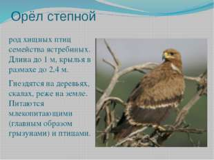 Орёл степной род хищных птиц семейства ястребиных. Длина до 1 м, крылья в раз