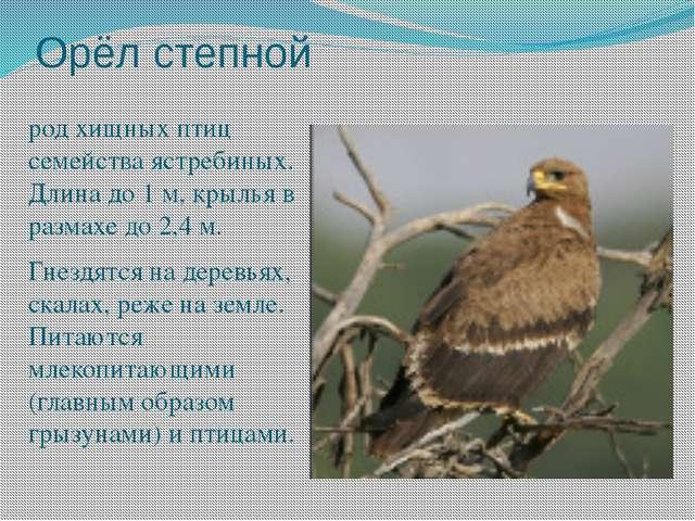 Орёл степной род хищных птиц семейства ястребиных. Длина до 1 м, крылья в раз...
