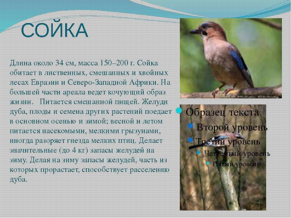 иногда птицы самарской области фото и названия здесь приводит