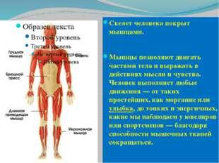 Скелет человека покрыт мышцами. Мышцы позволяют двигать частями тела и выража