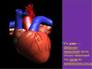 Се́рдце— фиброзно-мышечный орган, обеспе-чивающий ток крови по кровеносным