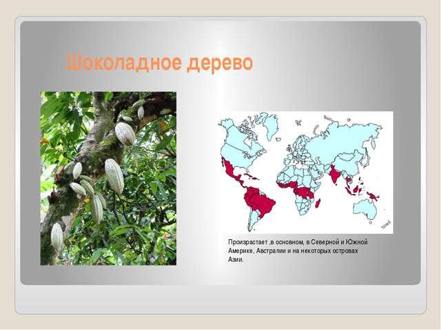 Шоколадное дерево Произрастает ,в основном, в Северной и Южной Америке, Авст...
