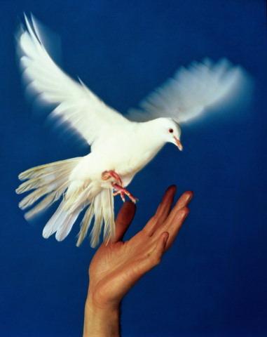 голубь мира - Самое интересное...