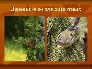 Деревья-дом для животных