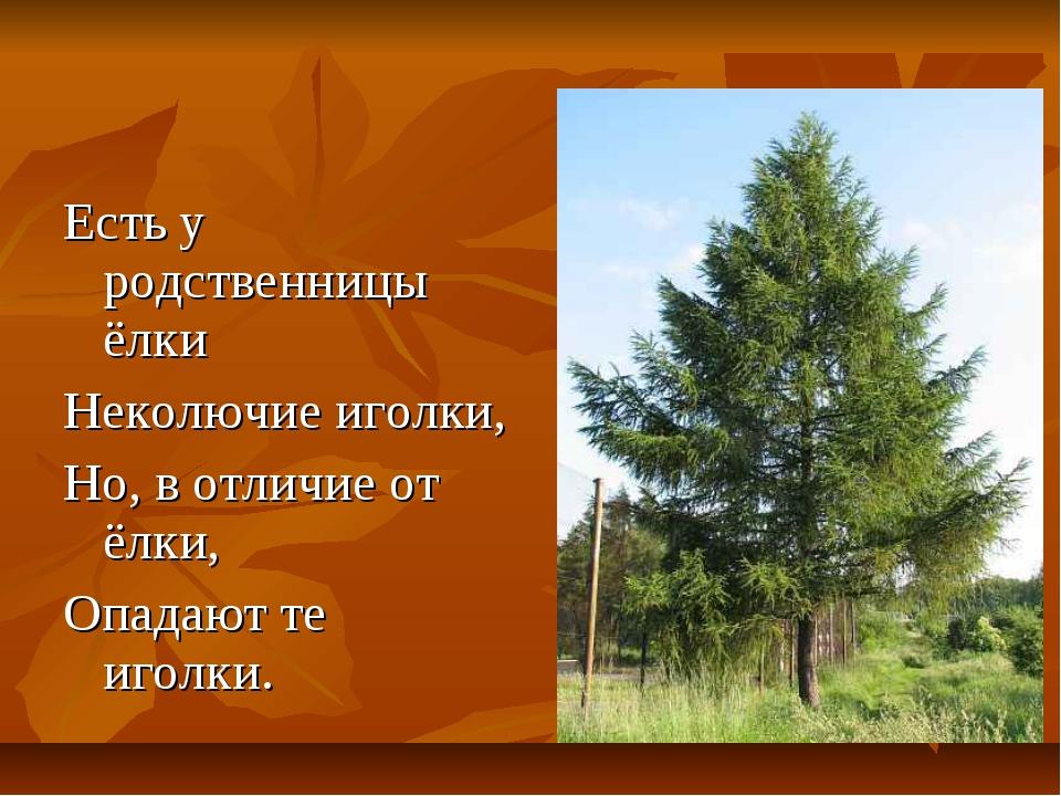 у елки опали иголки что делать опасным проявлением гипокальциемии