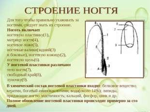 В химический состав ногтевой пластинки входят: белковое вещество кератин, бог