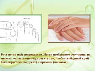 Рост ногтя идёт непрерывно. Ногти необходимо регулярно, по мере их отрастания