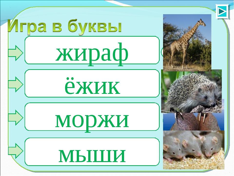 1 2 3 4 жираф ёжик моржи мыши