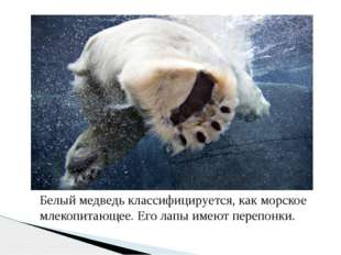 Белый медведь классифицируется, как морское млекопитающее. Его лапы имеют пер