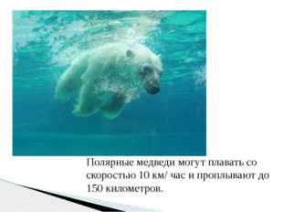 Полярные медведи могут плавать со скоростью 10 км/ час и проплывают до 150 ки