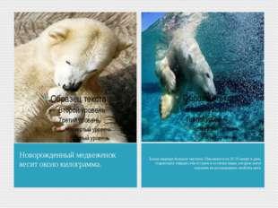 Новорожденный медвеженок весит около килограмма. Белые медведи большие чистюл
