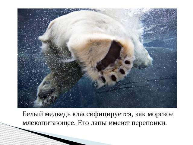 Белый медведь классифицируется, как морское млекопитающее. Его лапы имеют пер...
