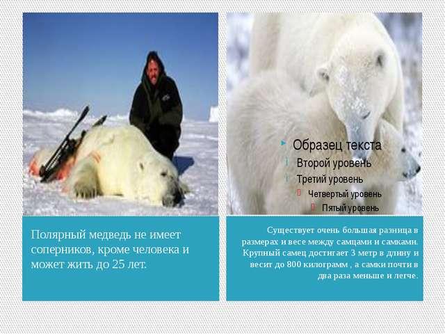 Полярный медведь не имеет соперников, кроме человека и может жить до 25 лет....