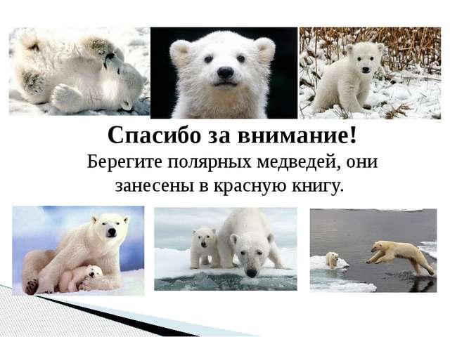 Спасибо за внимание! Берегите полярных медведей, они занесены в красную книгу.