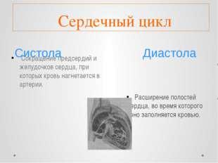 Систола Диастола Сердечный цикл Сокращение предсердий и желудочков сердца, п