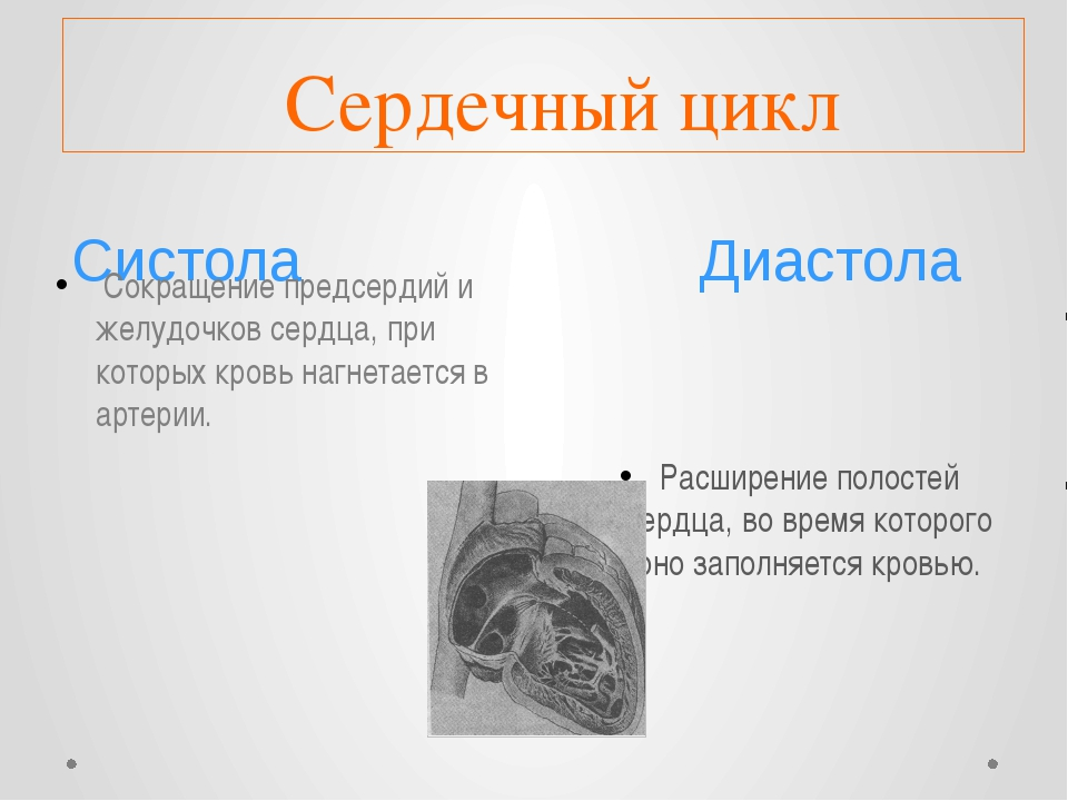 Систола Диастола Сердечный цикл Сокращение предсердий и желудочков сердца, п...