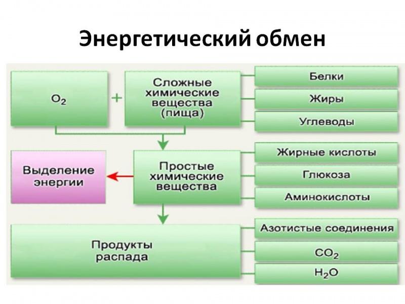 C:\Users\Евгений\Desktop\Фатима\8 класс\схема.jpg