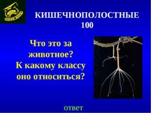 КИШЕЧНОПОЛОСТНЫЕ 100 Что это за животное? К какому классу оно относиться? ответ
