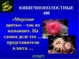 КИШЕЧНОПОЛОСТНЫЕ 400 «Морские цветы» - так их называют. На самом деле это … п