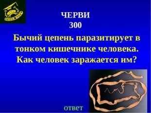 ЧЕРВИ 300 Бычий цепень паразитирует в тонком кишечнике человека. Как человек