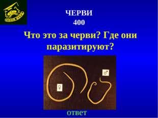 ЧЕРВИ 400 ответ Что это за черви? Где они паразитируют?