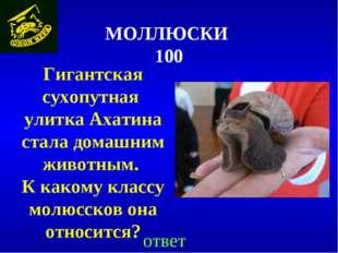 МОЛЛЮСКИ 100 ответ Гигантская сухопутная улитка Ахатина стала домашним животн