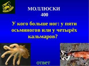 МОЛЛЮСКИ 400 У кого больше ног: у пяти осьминогов или у четырёх кальмаров?