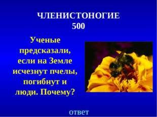ЧЛЕНИСТОНОГИЕ 500 Ученые предсказали, если на Земле исчезнут пчелы, погибнут