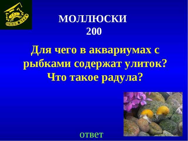 МОЛЛЮСКИ 200 Для чего в аквариумах с рыбками содержат улиток? Что такое радул...