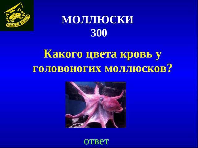 МОЛЛЮСКИ 300 Какого цвета кровь у головоногих моллюсков? ответ