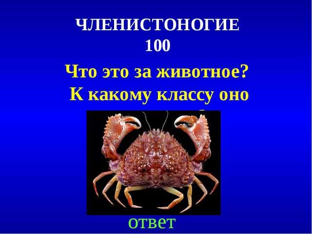ЧЛЕНИСТОНОГИЕ 100 Что это за животное? К какому классу оно относится? ответ