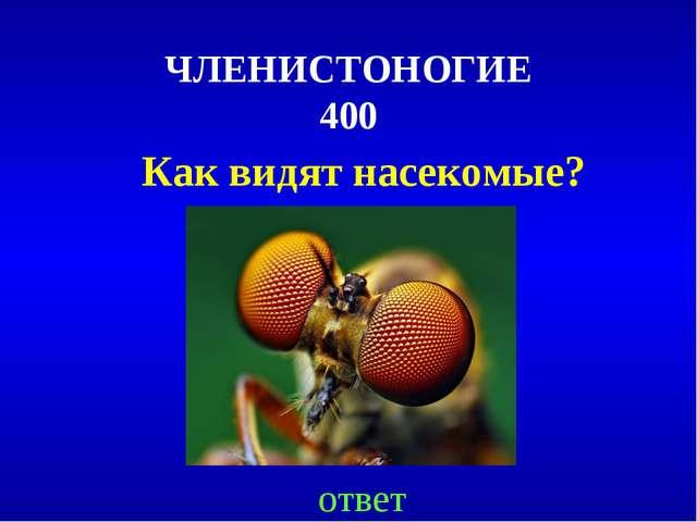 ЧЛЕНИСТОНОГИЕ 400 Как видят насекомые? ответ