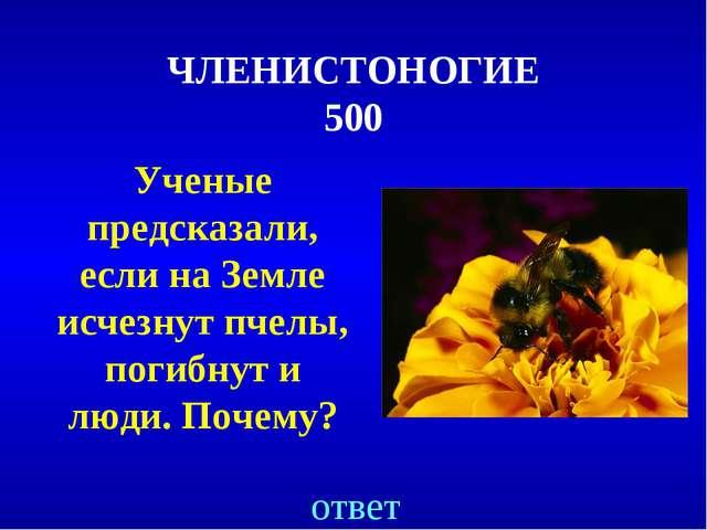 ЧЛЕНИСТОНОГИЕ 500 Ученые предсказали, если на Земле исчезнут пчелы, погибнут...