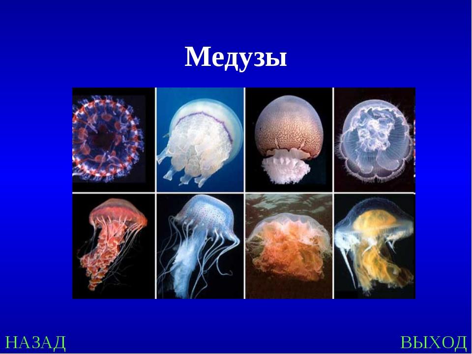 НАЗАД ВЫХОД Медузы