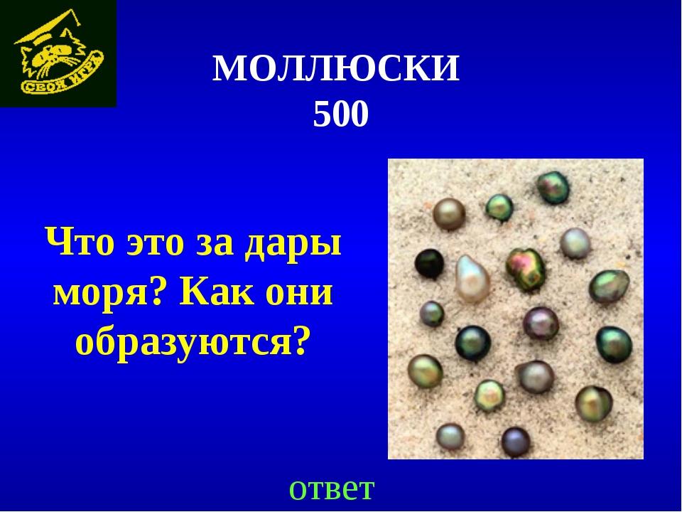 МОЛЛЮСКИ 500 Что это за дары моря? Как они образуются? ответ