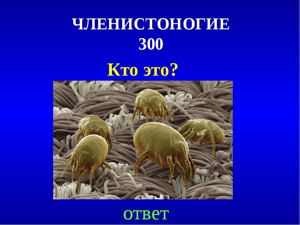 ЧЛЕНИСТОНОГИЕ 300 Кто это? ответ