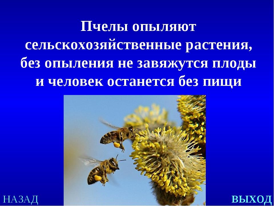 НАЗАД выход Пчелы опыляют сельскохозяйственные растения, без опыления не завя...