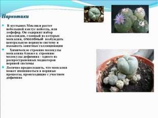 Наркотики В пустынях Мексики растет небольшой кактус пейотль, или лофофор. Он