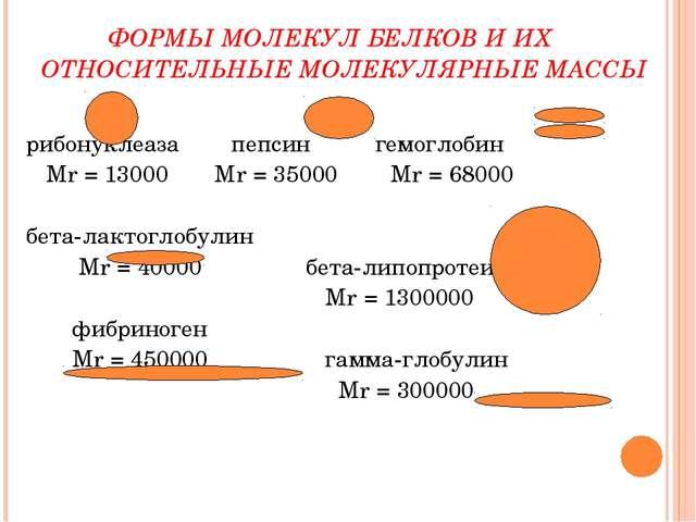 ФОРМЫ МОЛЕКУЛ БЕЛКОВ И ИХ ОТНОСИТЕЛЬНЫЕ МОЛЕКУЛЯРНЫЕ МАССЫ рибонуклеаза пепс...