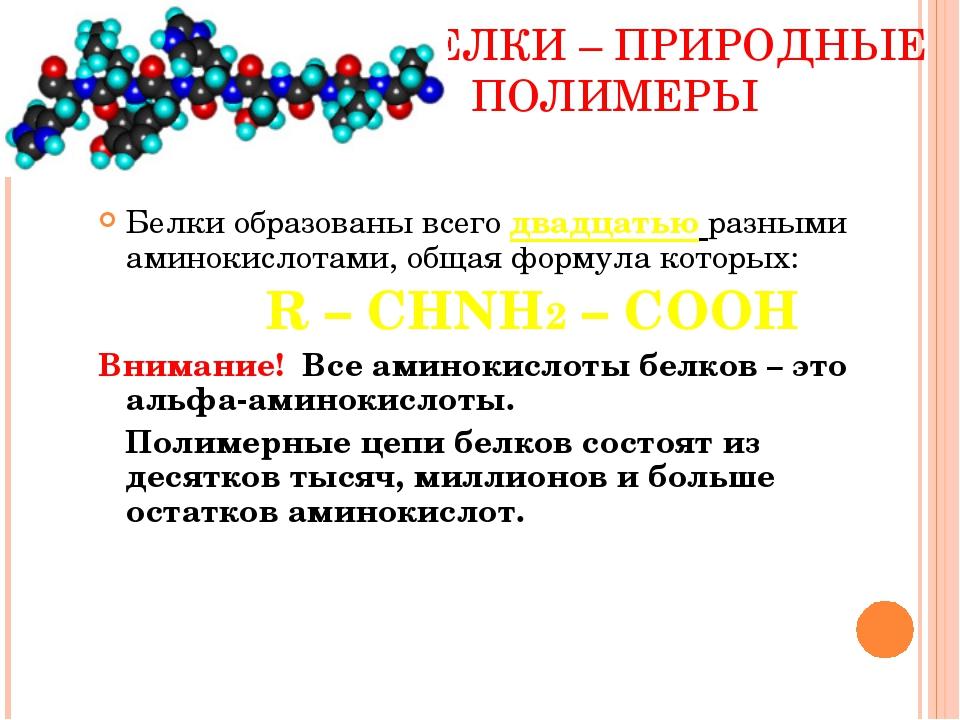 БЕЛКИ – ПРИРОДНЫЕ ПОЛИМЕРЫ Белки образованы всего двадцатью разными аминокис...