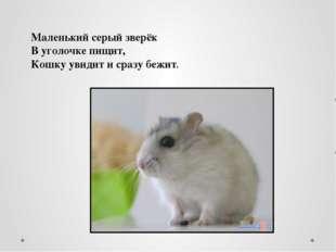 Маленький серый зверёк В уголочке пищит, Кошку увидит и сразу бежит.