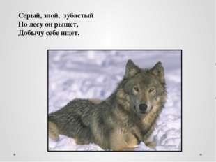 Серый, злой, зубастый По лесу он рыщет, Добычу себе ищет.